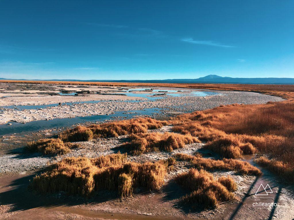 O que fazer no deserto de Atacama: Lagoa Cejar