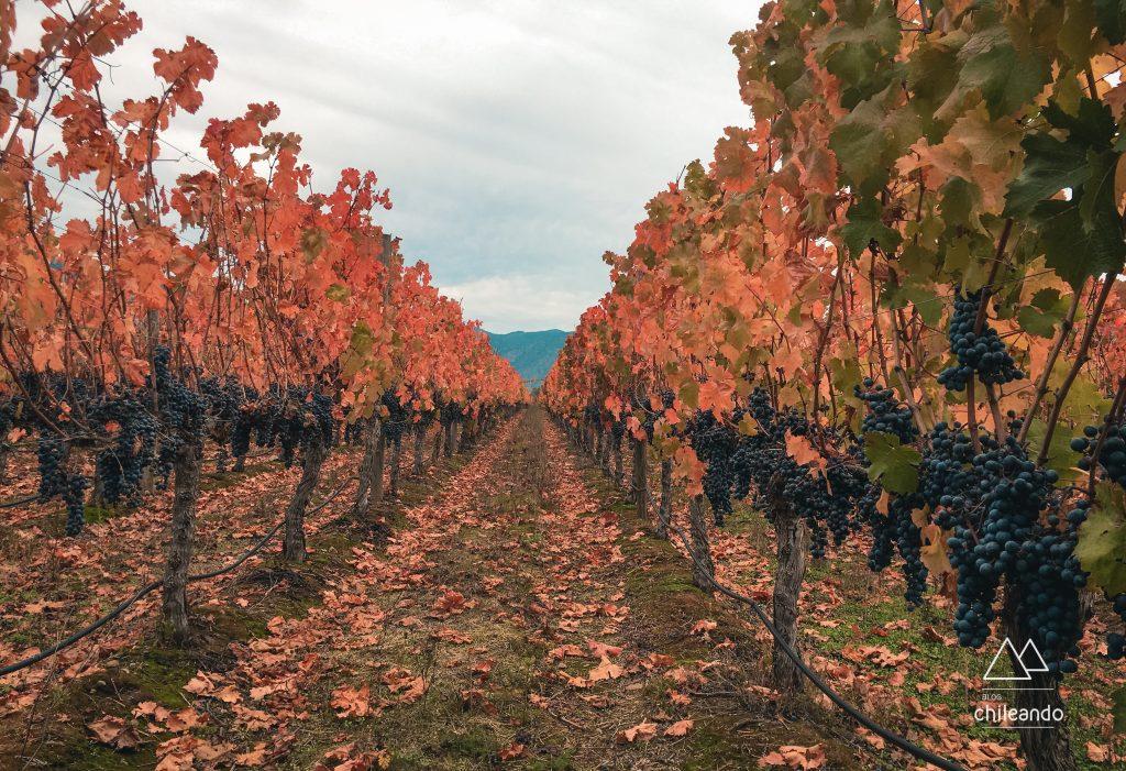 Parreiras da vinícola Santa Cruz