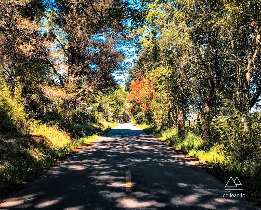 Estrada de acesso ao Parque Conguillío