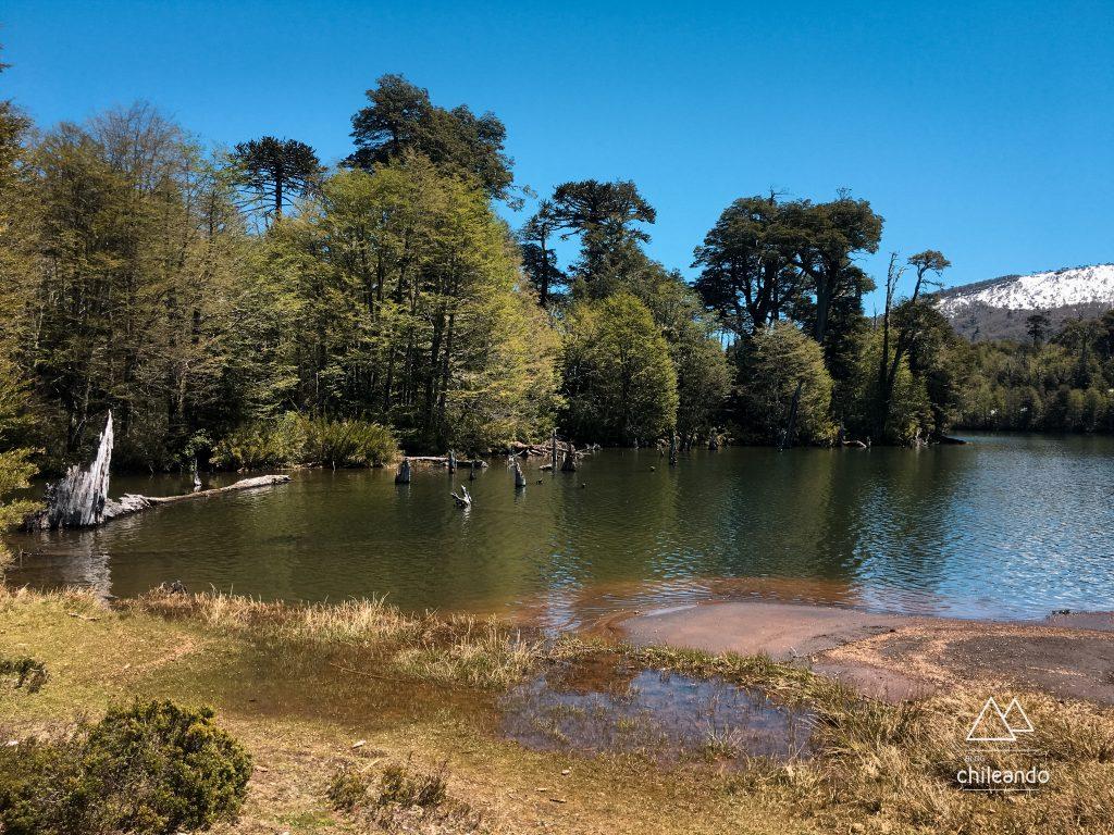 Lagoa Captren no Parque Conguillío