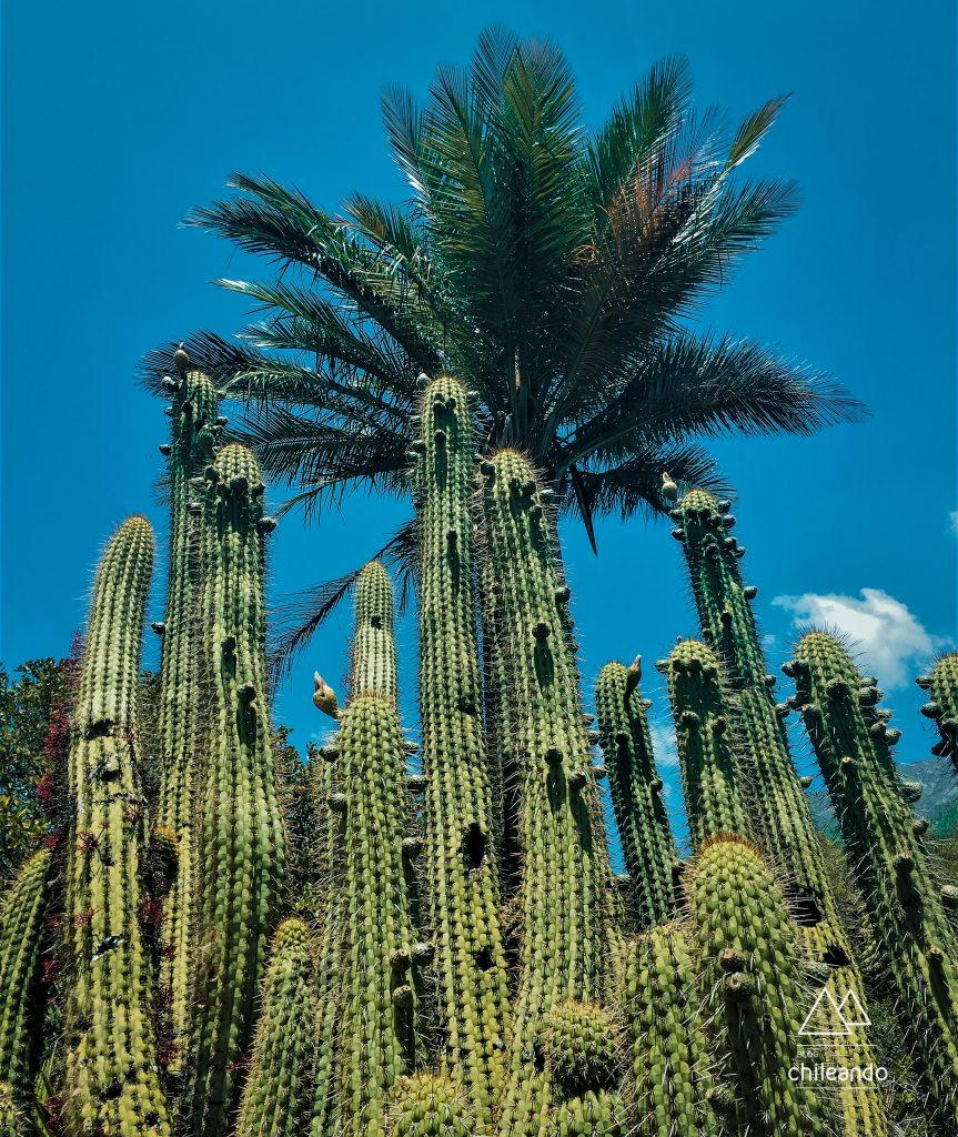 Vegetação desértica do parque La Campana