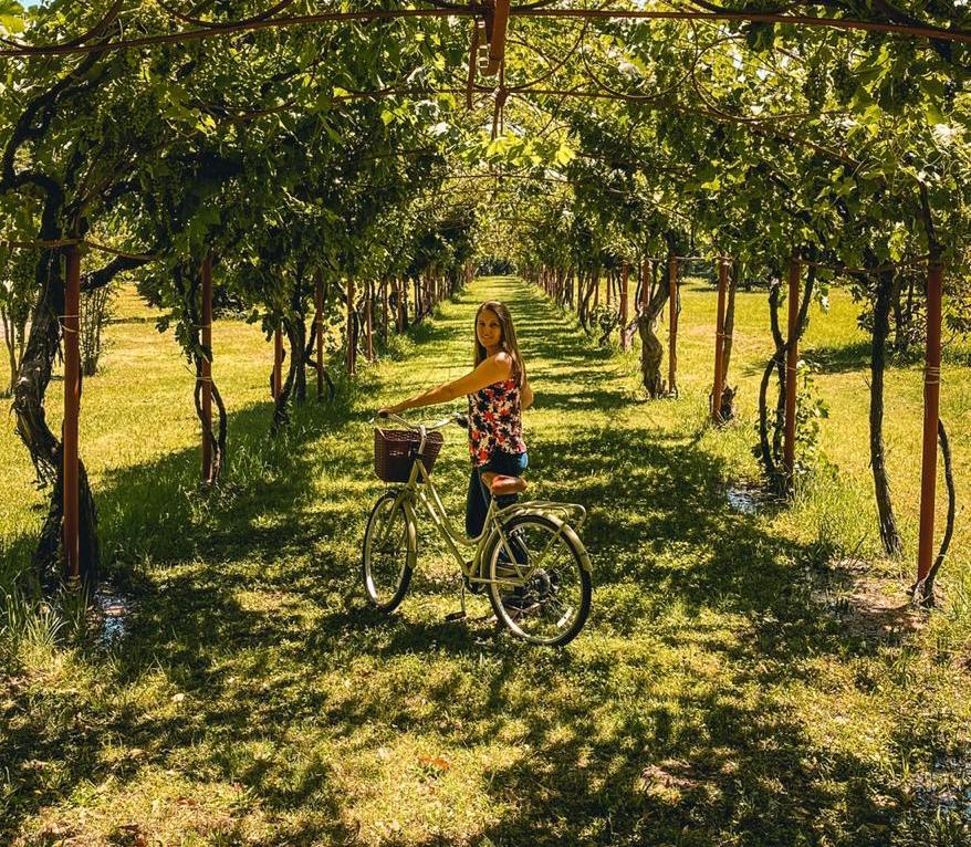 Tour de bike na vinícola Cousino Macul em Santiag