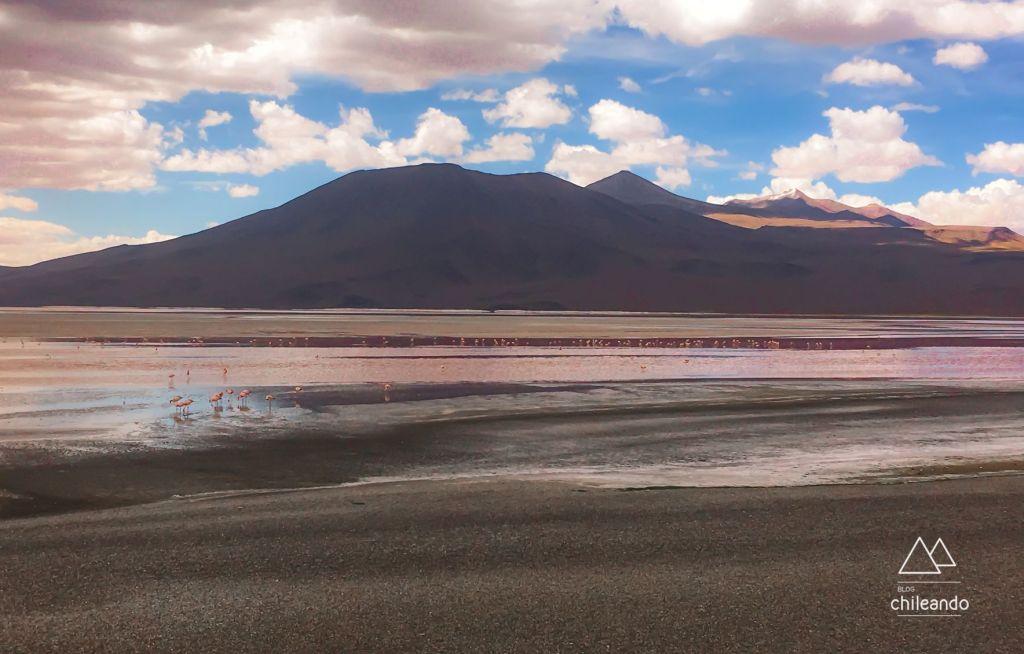 A lagoa dos flamingos