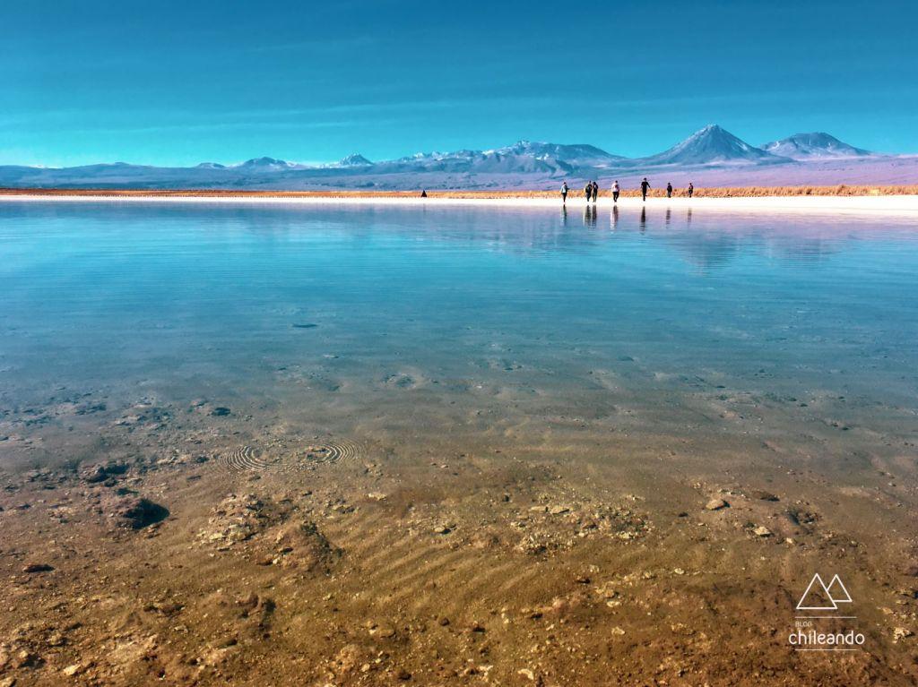 A alta salinidade da lagoa Cejar, no Atacama, proporciona uma experiência diferente