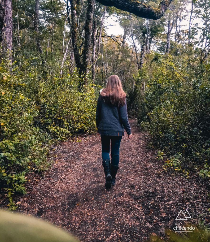 A trilha Carilemu é uma amostra de um bosque Valdiviano