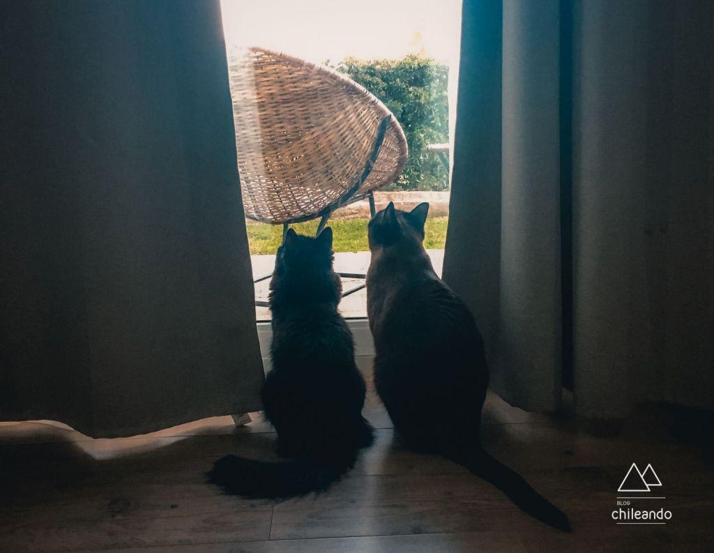Viajando com gatinhos