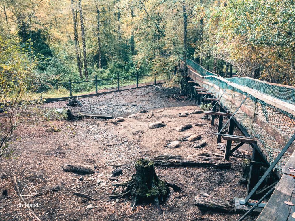 Área de javalis no setor Los Ciervos