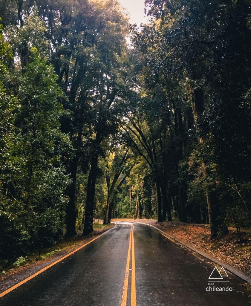 Bosque de Quilin