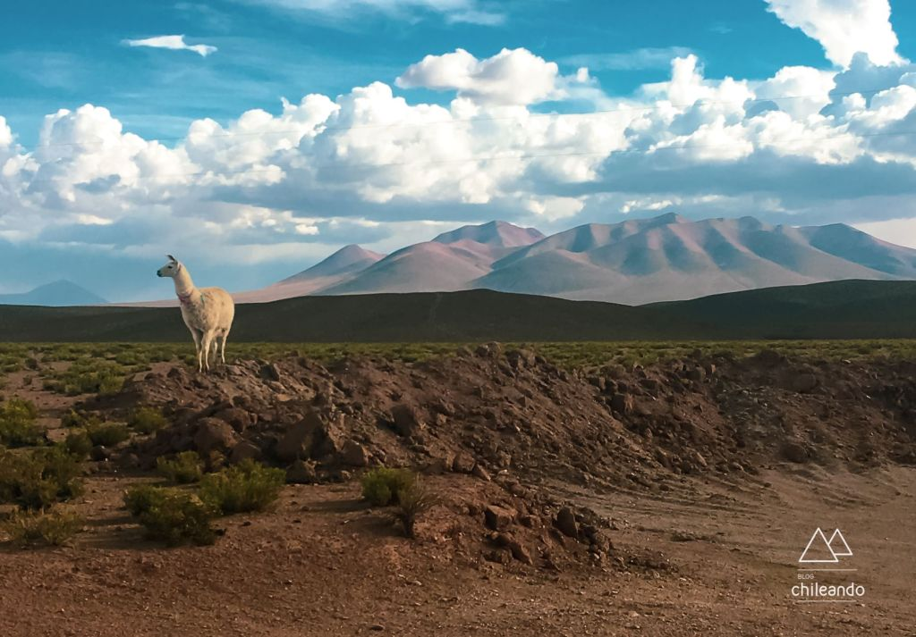 O deserto boliviano, rumo ao salar de Uyuni