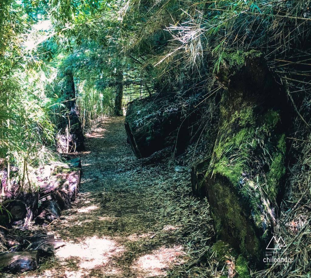Percurso autoguiado no Parque Nacional Tolhuaca
