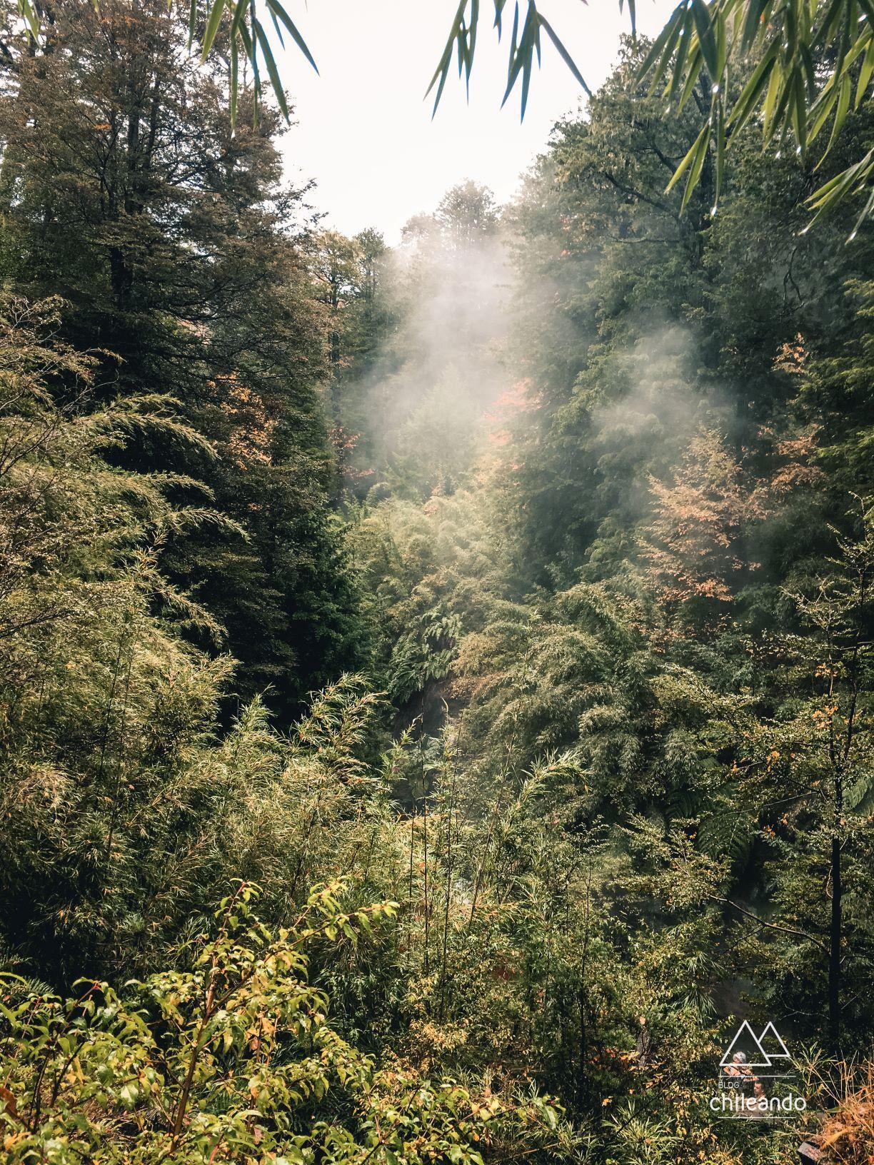 Piscinas quentes das termas geométricas em meio a um denso bosque