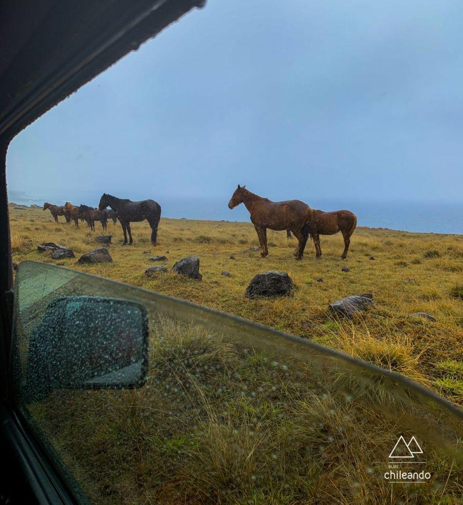 Diversos animais circulam livres pela Ilha de Páscoa