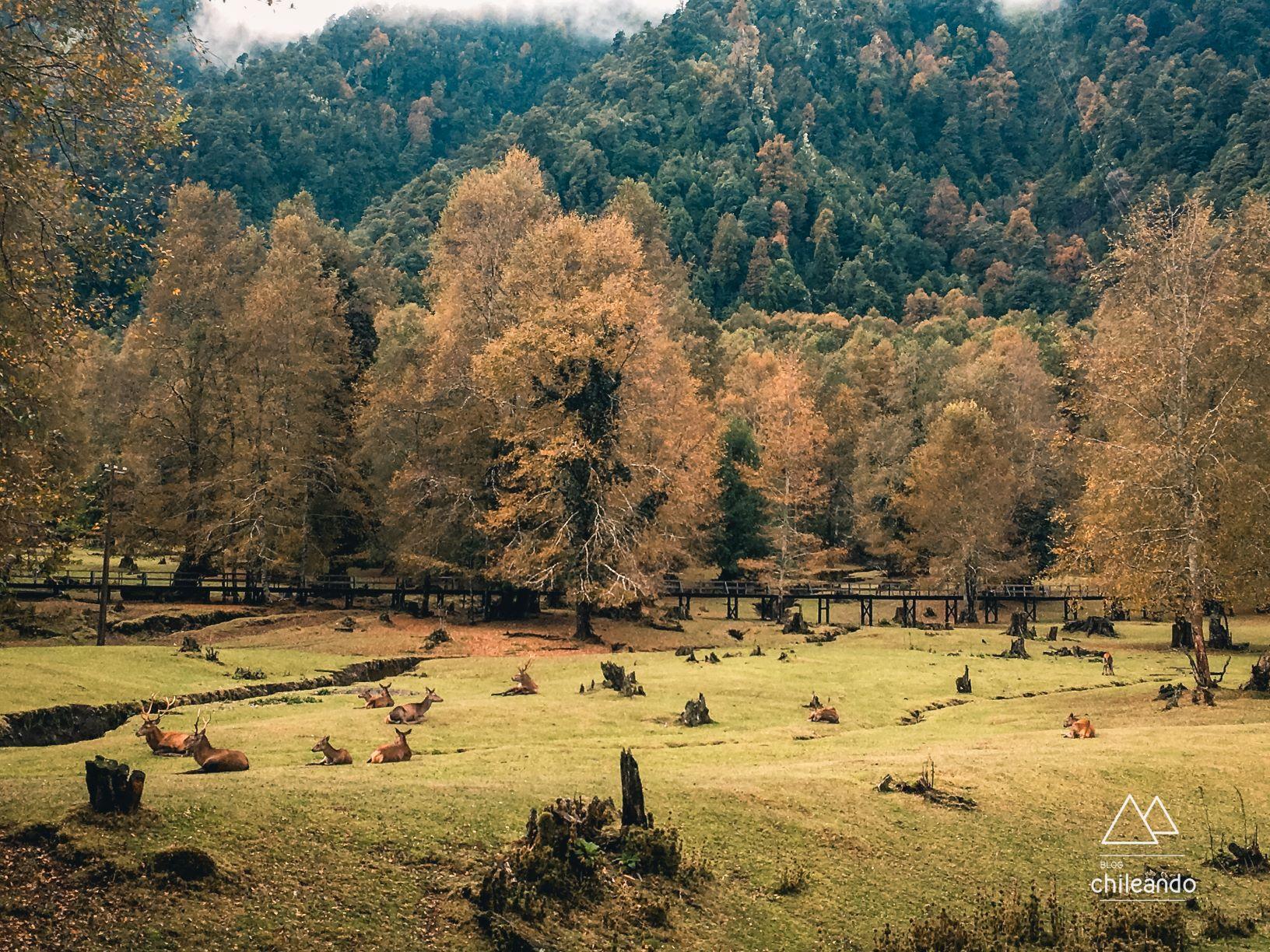 Área dos veados selvagens